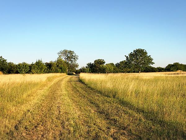 フランスの田舎の小道